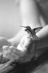 Mão e beija flor