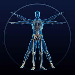 Proporção Corpo