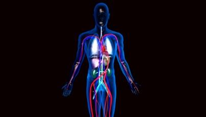 Visualização do Corpo